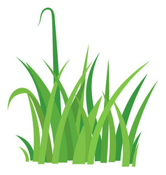 fragment of a green grass vector image vector image