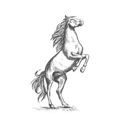 Rearing horse sketch equine horserace sport vector