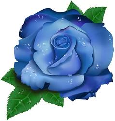 Beautiful blue rose vector