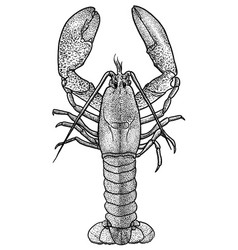 Lobster  drawing engraving ink lin vector