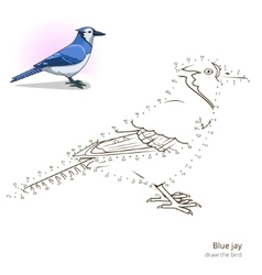 Blue jay bird learn to draw vector