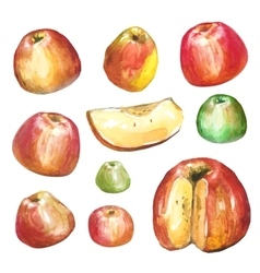 Apples painted with watercolors on white paper vector image
