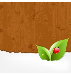 Wood Background With Ladybug vector image