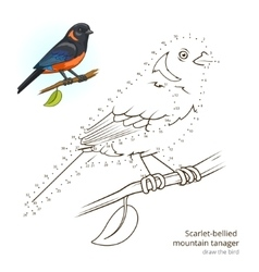 Scarlet bellied mountain tanager draw vector