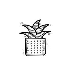 Mother-in-law tongue plant in a pot sketch icon vector