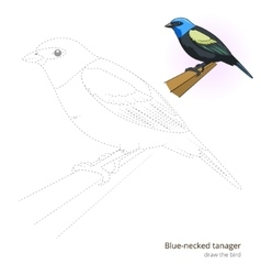 Blue necked tanager bird learn to draw vector