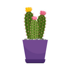 cactus with flowers house plant vector image vector image