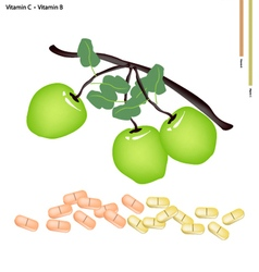 Green apple with vitamin c and vitamin b vector