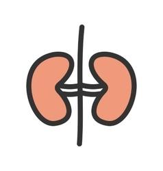 Kidneys vector