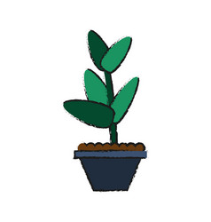 plant in pot icon image vector image