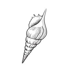 spiral conch sea shell isolated sketch style vector image vector image