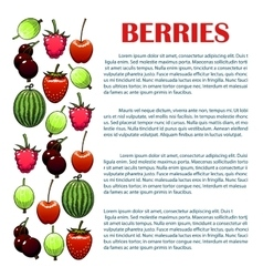 Berries infographic with berry icons vector