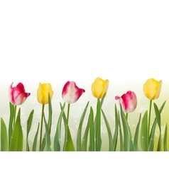 Spring tulipa background eps 10 vector
