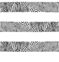 Stripes of zebras vector