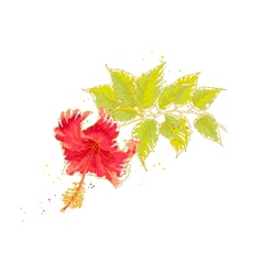 Hibiscus flower isolated on white background vector image vector image