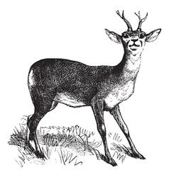 Roe Deer vintage engraving vector image