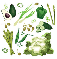 Set of ripe green vegetables vector