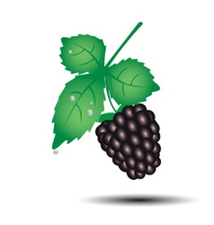 colorful blackberry summer fruit with leaf eps10 vector image