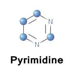 Pyrimidine vector