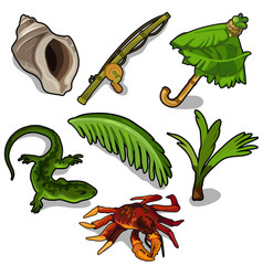 Tropical plants rod crab lizard and others vector