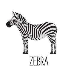 Cartoon cute zebra flat vector