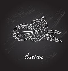Hand drawn durian vector