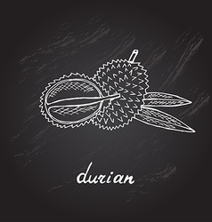 Hand drawn durian vector