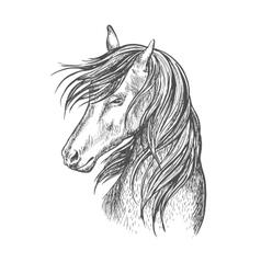 Black horse mustang sketch portrait vector