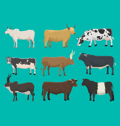 bulls and cows farm animal cattle mammal vector image vector image