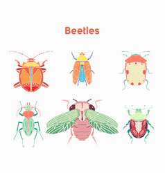 set drawn beautiful beetles vector image vector image