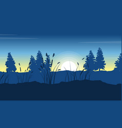 silhouette of spruce on hill landscape at morning vector image vector image