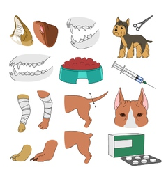 veterinary vector image vector image