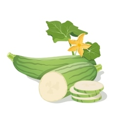 Marrow vegetables vector