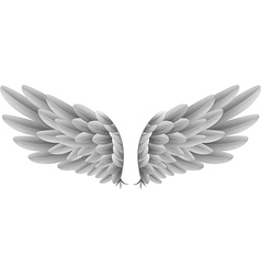 Natural white goose wings isolated background vector