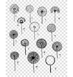 Dandelions collection sketch fro your design vector image