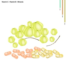 Star gooseberry with vitamin c b and minerals vector