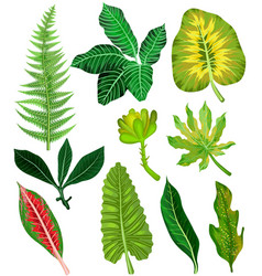colorful and exotic set of tropical leaves vector image