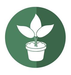 Pot plant garden concept shadow vector
