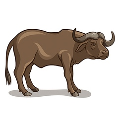 Buffalo vector image