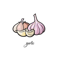 Garlic bulb and cloves with ledend vector
