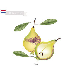 Dutch netherlands holland strawberry berry fr vector