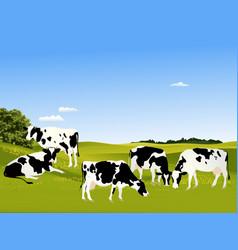 Cows vector image