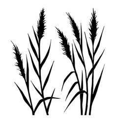 Silhouette of the reed vector