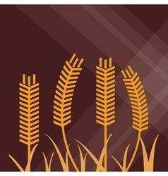 Wheat icon grain design Agriculture concept vector image