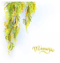 Yellow mimosa background vector