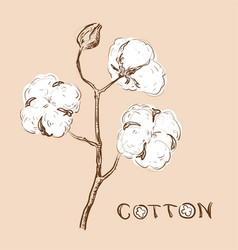 Cotton branch vector