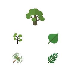 Flat icon nature set of acacia leaf garden vector