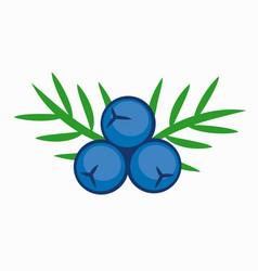 Blue color juniper berry vector