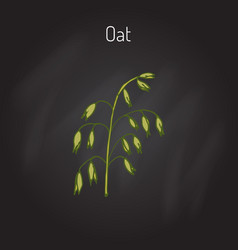 Hand drawn oats ears sketch vector