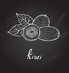 Hand drawn kiwi vector